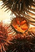 One halved sea urchin among whole sea urchins