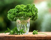 Parsley in glass of water