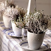Plants with artificial snow as winter table decoration