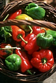 Various types of peppers in basket