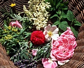 Medicinal flowers and herbs in a wicker bowl