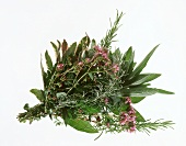 Bunch of herbs on a sheet of glass