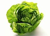 Whole Head of Butterhead Lettuce