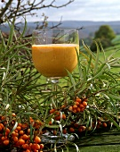 Sea buckthorn cream in glass, sprig of sea buckthorn beside it