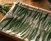 Ribwort plantain leaves laid out on kitchen cloth to dry