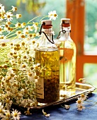 Medicinal camomile flower oil and fresh camomile flowers