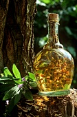Sage wine (old household remedy)