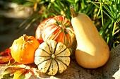 Various pumpkins in open air