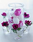weiße und lila Eier mit Feder im Glas, rundherum Anemonen