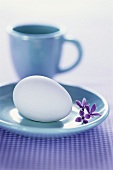 White egg on blue saucer, blue cup behind
