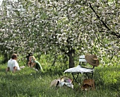 Young couple and chair under flowering apple tree