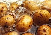 Cooking potatoes (close-up)