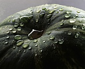 Watermelon with drops of water (close-up)