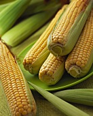 Fresh corncobs with leaves