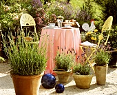 Lavender in pots in front of a garden table and chairs