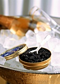 Russian sturgeon caviare in an opened tin on ice