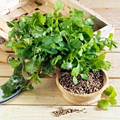 Coriander seeds and leaves