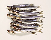 Lots of anchovies