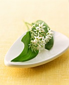 Ramsons (wild garlic) in china dish