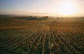 Vineyard near Vosne-Romanée, Burgundy, France