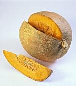 Gelber Zentner pumpkin