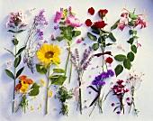 Verschiedene Sommerblumen übersichtlich angeordnet