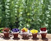 Roses, sunflower, thistles ... on terracotta pots