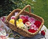 Various coloured roses in wicker basket