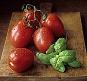 Plum tomatoes with basil on a wooden board