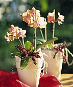 Orchids and berries in decorative pots
