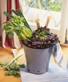 Red lettuce, celery and leek in a bucket