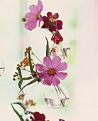 Hanging glass vases with Cosmea, coloured glass crystals etc.