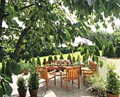 Idyllic terrace with overhanging cherry tree