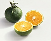 Clementine Niagawa (cross: mandarin x bitter orange, Italy)