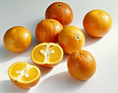 Mandarin oranges (Villa Late, Spain)
