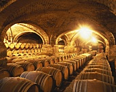 Barrique barrels in wine cellar of Viña San Pedro, Curico, Chile