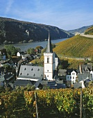 Vineyards near Assmanshausen with view of Rhine, Germany