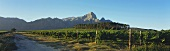 View over Bellingham Winery to Groot Drakenstein, S. Africa