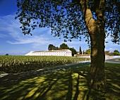 Chais (Lager), Château Mouton-Rothschild, Bordeaux, Frankreich
