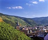 Weinberg über Dernau im Ahrtal, Deutschland