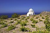 Kirche in der Nähe von Akrotiri, Santorin, Griechenland