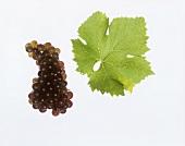 Malvasia grapes with vine leaf