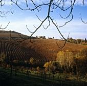 Isole e Olena Wine Estate, Olena, Chianti Classico