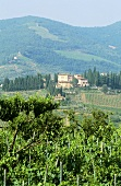 Vignamaggio Wine Estate, Greve, Chianti, Italy