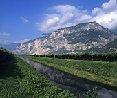 Wine-growing in Trentino, Italy