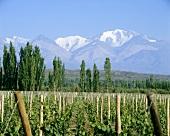 Vineyards around Tupungato at foot of Andes, Mendoza, Argentina