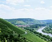 Einzellage 'Würzburger Abtsleite', Maindreieck, Germany
