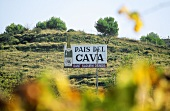 Sant Sadurni d'Anoia, 'Cava capital', Penedès, Spain