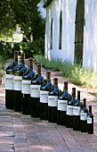 Bottle parade at Rust en Vrede Winery, S. Africa