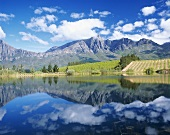 Vineyards around Tulbagh, S. Africa